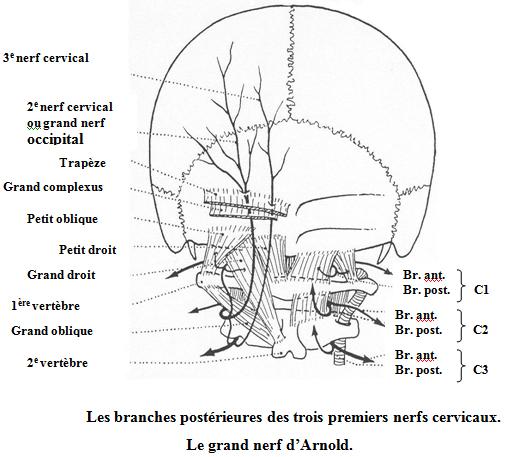Névralgie d'Arnold et ostéopathie